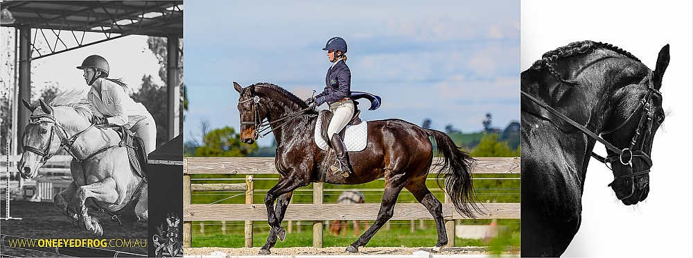 Bookings for Equestrian Events