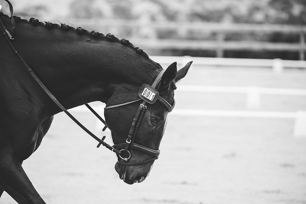 Carlton Performance Horses - CPH Unofficial Autumn Dressage Series- Event #2